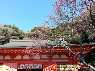 鎌倉 荏柄天神社の紅梅