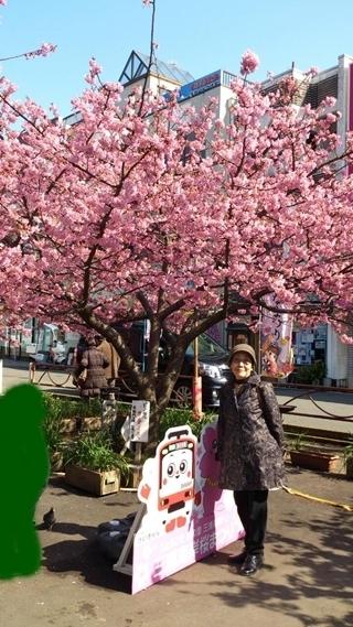 kama_2015-02-27_hikaru.jpg