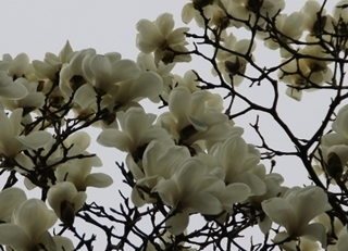 kama_2015-03-18 koo3.jpg