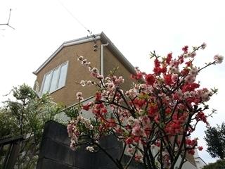 kama_2015-03-29 11.23.02.jpg