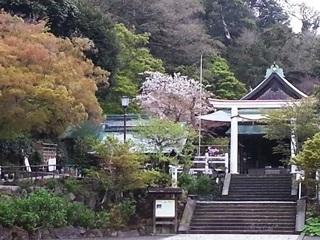 鎌倉宮 2015/04