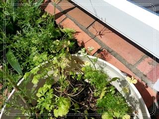 kama_2013-07-18 12.24.45.jpg