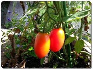 kama_2013-08-27 14.33.09.jpg