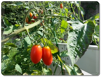 kama_2013-08-27 14.35.08.jpg