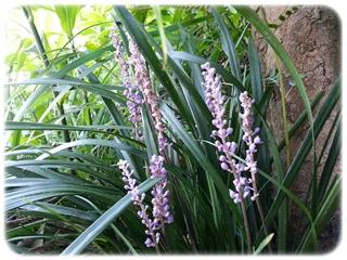 藪蘭(やぶらん)の花