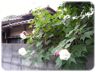 kama_2013-10-04 11.56.31.jpg