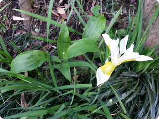 kamakura1_2013-05-18 15.27.40.jpg