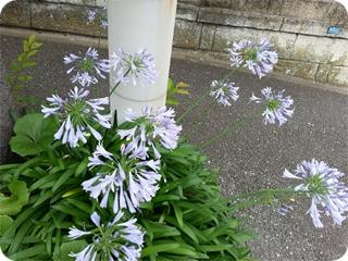 kamakura_2013-06-25 13.25.20.jpg